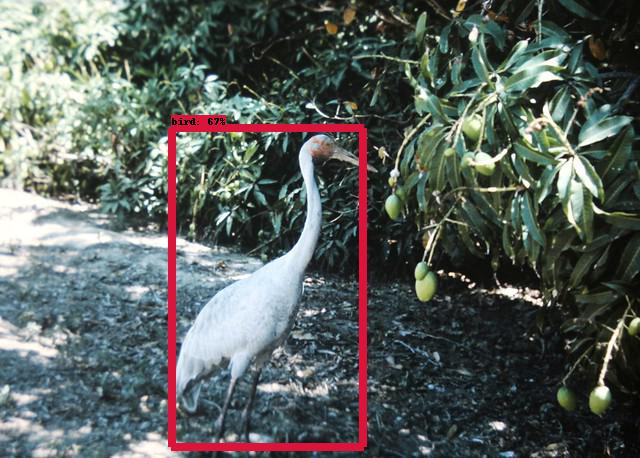 Detecting birds in the zoo