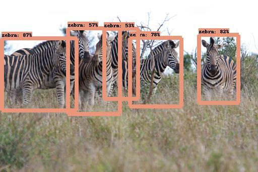 Detecting group of zebras